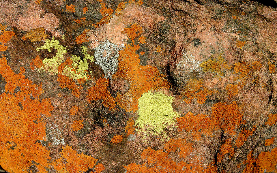 Lichens on sandstone rocks